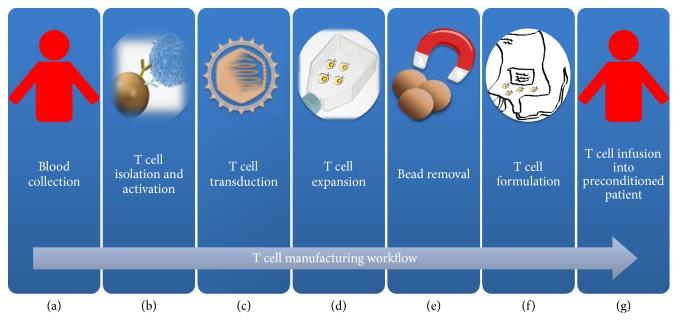 Terapias de células CAR. Paso a paso