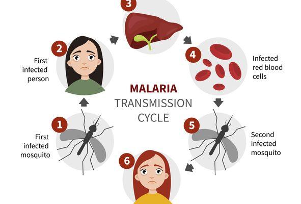 Situación actual de la vacuna contra la malaria