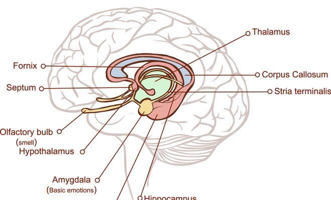 LATE, una nueva forma de demencia parecida al Alzheimer