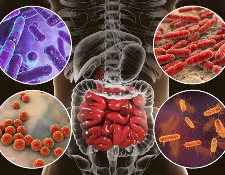 Prebióticos y probióticos para tratar el hígado graso