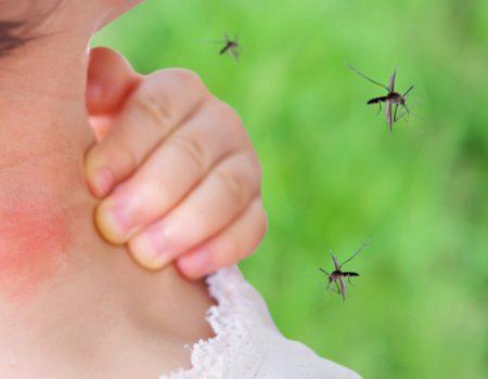 El Dengue, una amenaza creciente